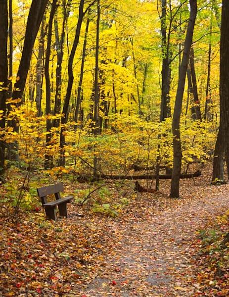 Autumn Woodland Respite - shop fine-art notecards   Closer Views