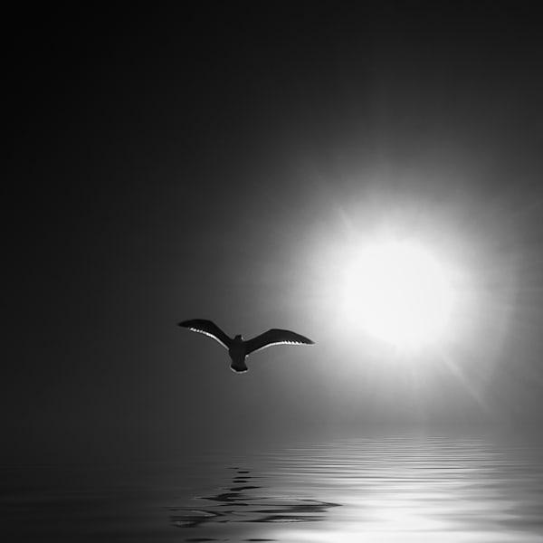 """""""Blackbird Photograph for Sale as Fine Art"""