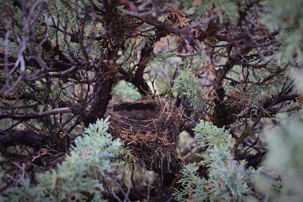 Photograph of a bird nest for sale as Fine Art