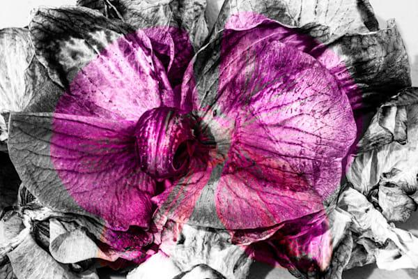 Orchid Novel
