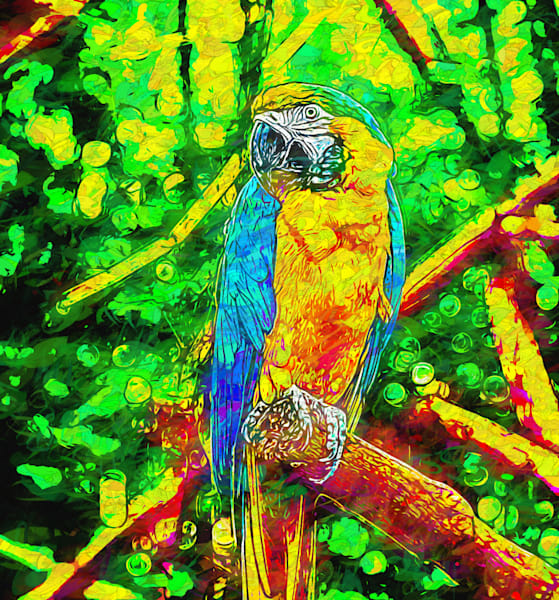 Macaw in Dots
