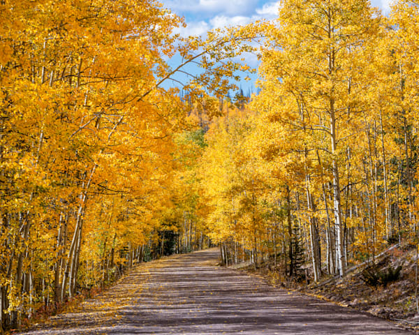 Aspen Drive - Colorado prints