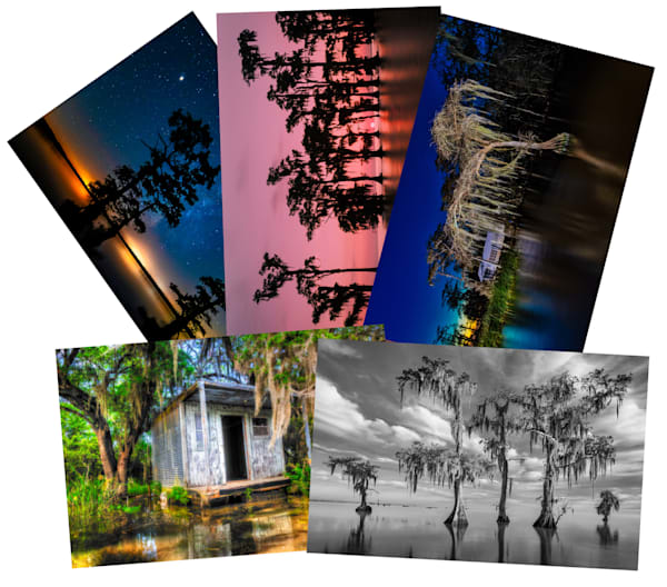 Swamp photo greeting cards - note cards
