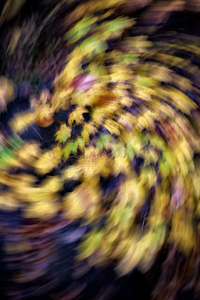 Maple Leaf Spiral | Shop Photography by Rick Berk