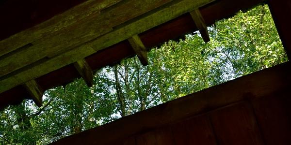 Trees Through Drift Creek Covered Bridge