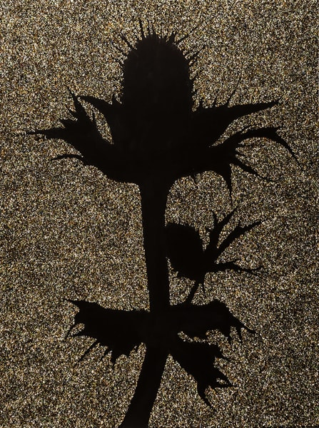 Miss Willmott's Ghost Art | RPAC Gallery