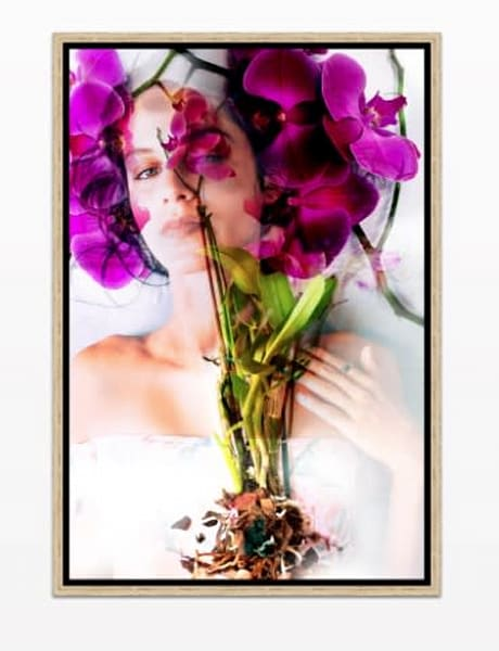 Orchid Princess Photography Art | Meredith Ochoa