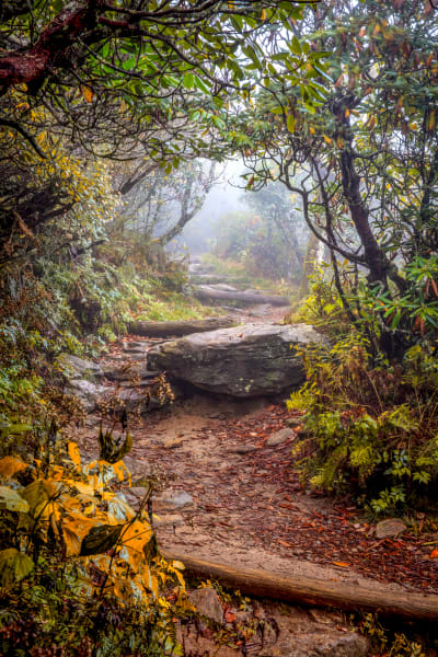 Autumn Trail Photography Art | Red Rock Photography