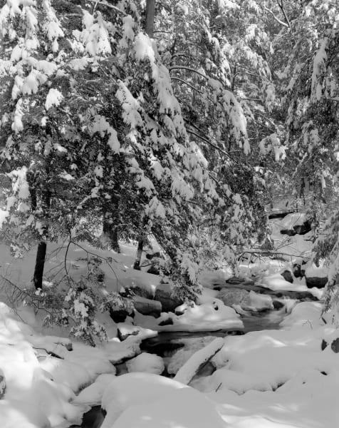 Fine Art Print | Fresh Snow Along Quiet Forest Stream