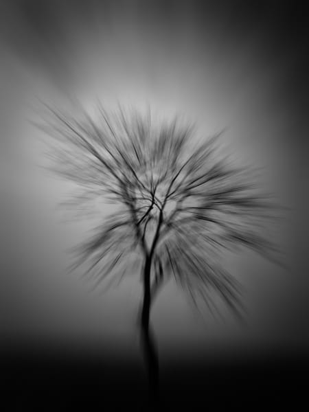 The Vague Trees, black&white, art, photographs
