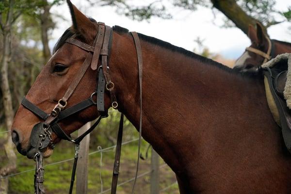 horse, argentina