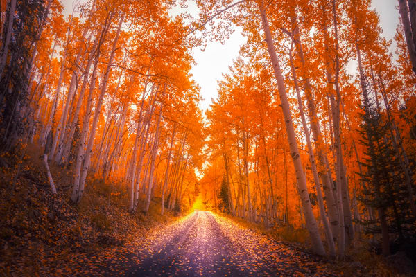 Fall Country Road Photography Art | Derrick Snider Imagery