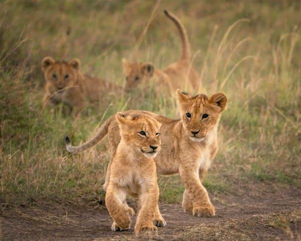 Cub Scouts Photography Art | Carol Brooks Parker Fine Art Photography