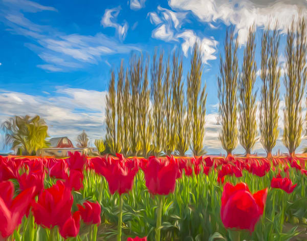 Dreaming of Tulips