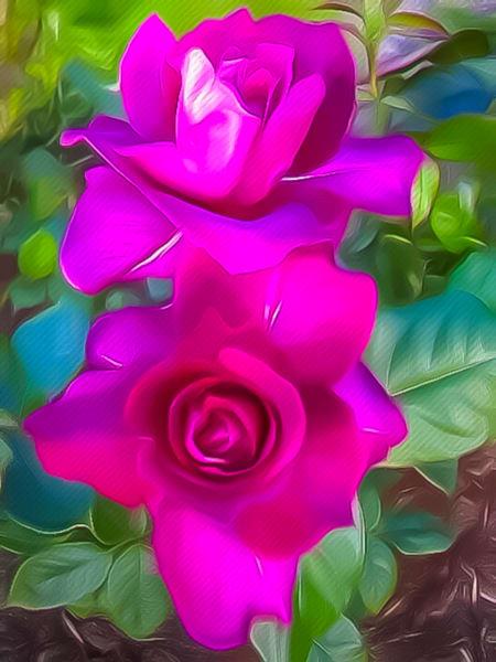 Roses Adrift