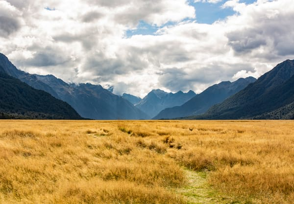 Fields Of The Fiordland Valley Photography Art | Kristofer Reynolds Photography