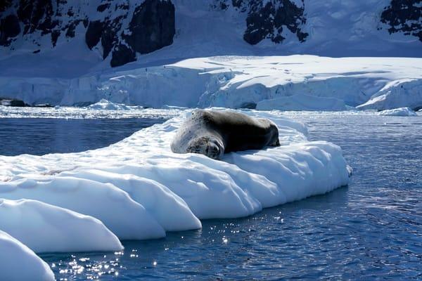 Seal,Antarctica
