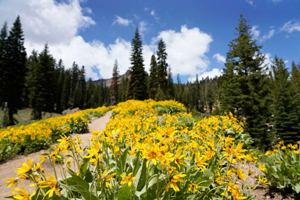 Flowers,Lassen Volcanic National Park