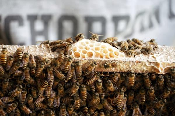 Bees, Vietnam