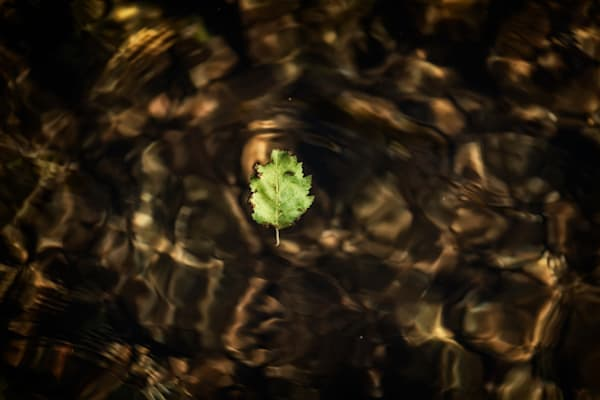 Photograph of a leaf floating in a river by Estes Park, Colorado.