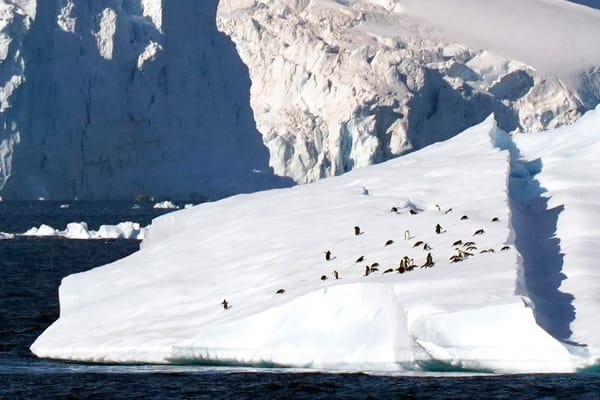 Antarctica,iceberg,penguins