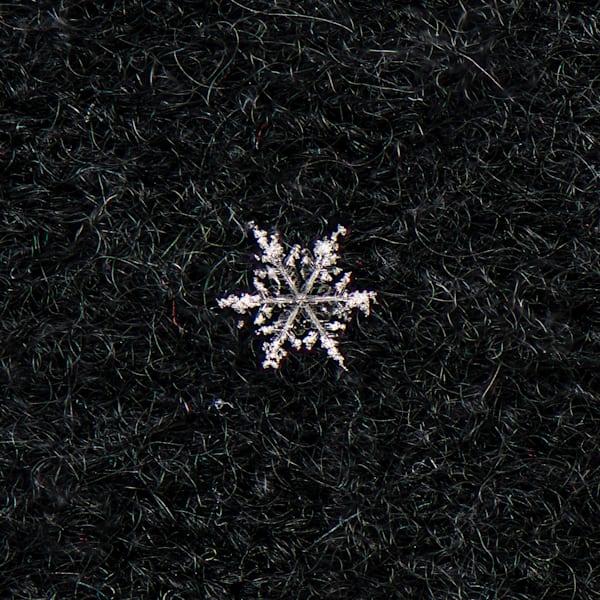 Photograph of a snowflake taken in Colorado.