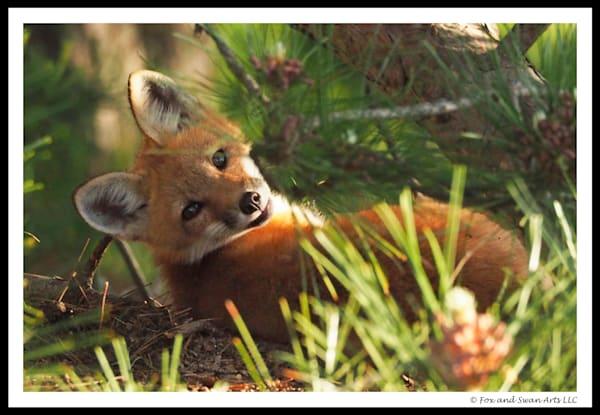 Shy Fox Card