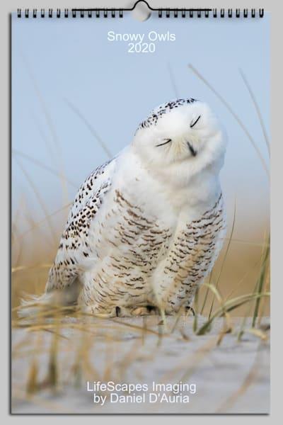 Snowy Owls 2020