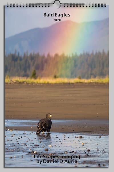 Bald Eagles 2020 | danieldauria