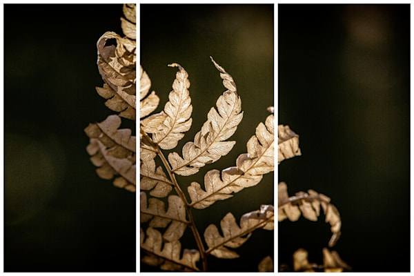 Sunlit Fall Triptych | Fine Art Photography by Nathan Larson
