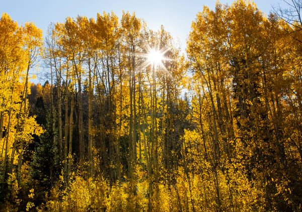 Aspen Light Photography Art | Kristofer Reynolds Photography