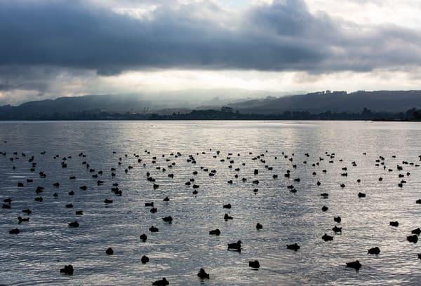 Morning On Lake Rotorua Photography Art | Kristofer Reynolds Photography