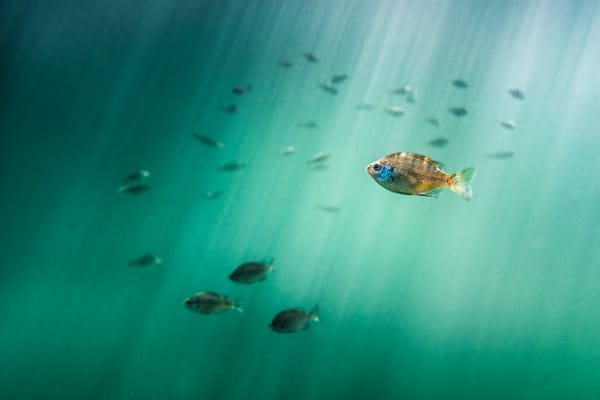 Jewel Of The Sea Photography Art | Trevor Pottelberg Photography