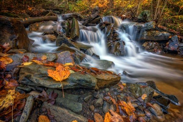 Fallen Leaf in Ricketts Glen   Shop Photography by Rick Berk
