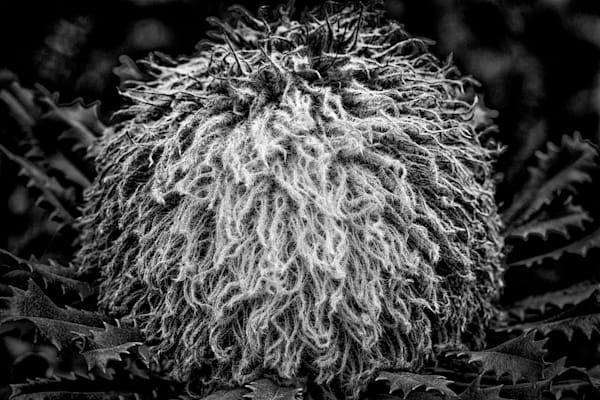 Furball Photography Art | Roberto Vámos Photography