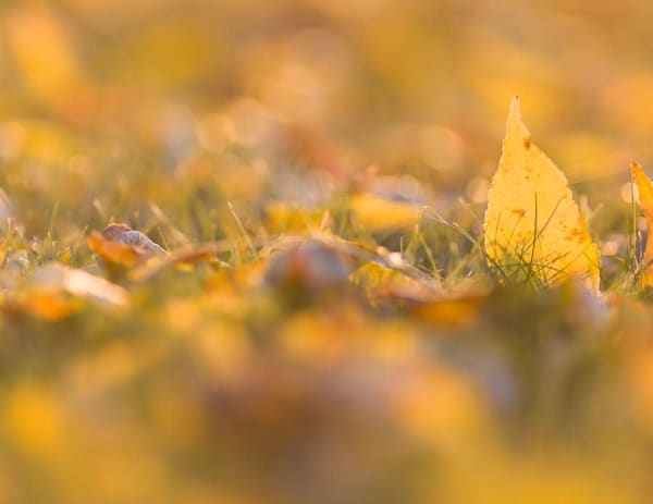 Low-angle autumn ash leaves - shop fine-art notecards | Closer Views