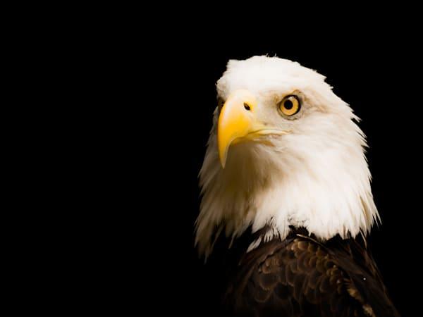Eagle In Color 12x16 Art | No Blink Pictures, LLC
