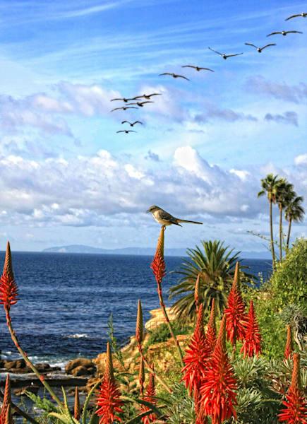 Laguna Beach   Heisler Park Photography Art | Rosanne Nitti Fine Arts