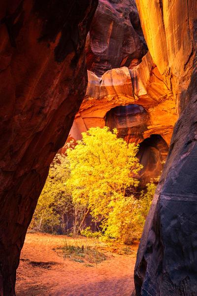 neon canyon