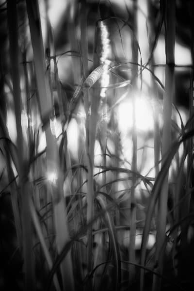 A SINGING LIGHT