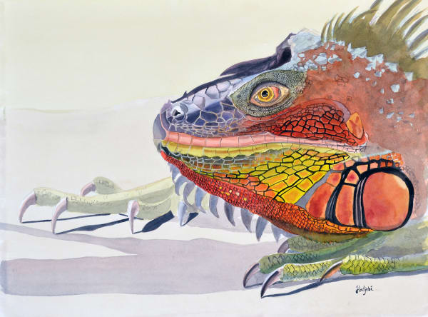 A painting of a Sanibel Iguana by Sanibel artist Shah Hadjebi