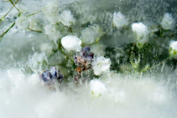 Fine Art Photography Gelid Amalgamation 02