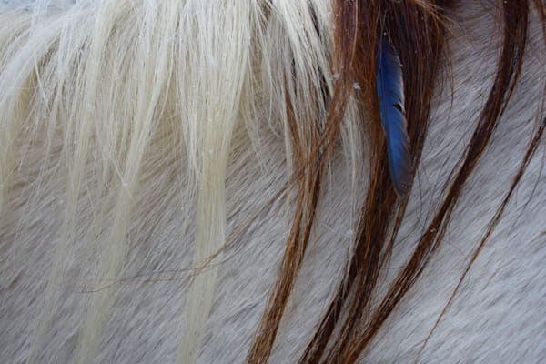 Photograph of a horse's mane adorned with a feather for sale as Fine Art