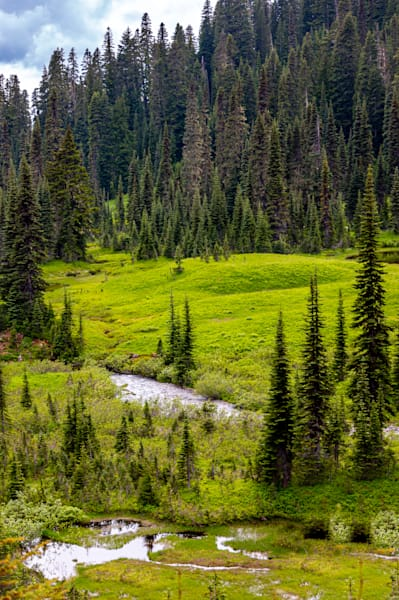 Paradise Meadow, Mount Rainier National Park Photography Art | Catherine Balck Photography