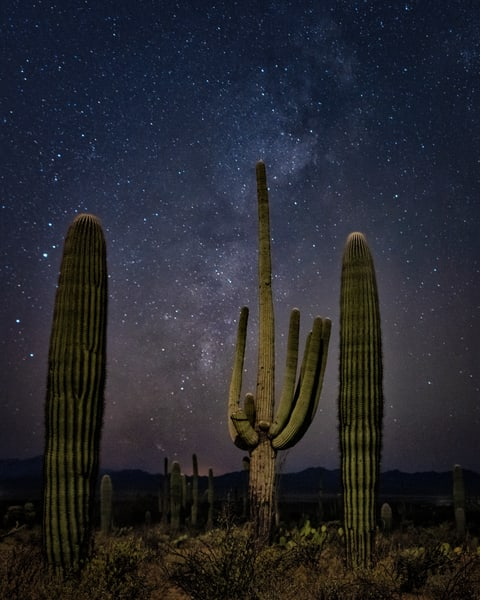 Saguaros And The Milky Way Photography Art | Carol Brooks Parker Fine Art Photography