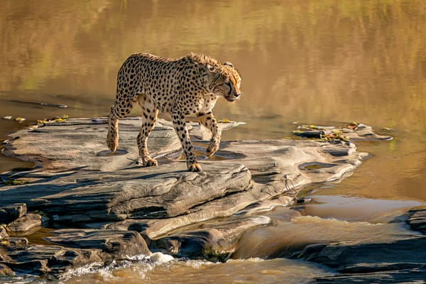 Stepping Stones Photography Art | Carol Brooks Parker Fine Art Photography