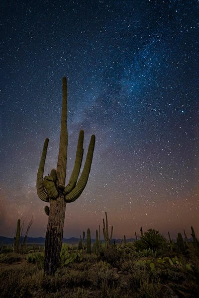 Saguaro Under The Milky Way Photography Art | Carol Brooks Parker Fine Art Photography