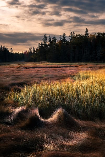Thompson Island Marsh in Autumn. Gorgeous fall colors and textures make coastal scene in Maine's Acadia National Park by fine art photographer Mike Taylor of Taylor Photography.