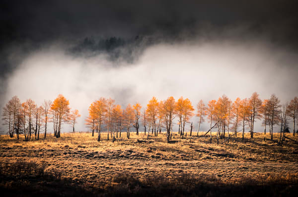 Season of the Witch. Golden fall foliage of aspens against the cloud-shrouded San Juan mountains of Colorado, an iconic western scene of fine art photography by Mike Taylor of Taylor Photography.