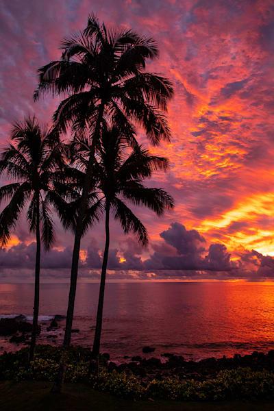 """""""Blazing Palms"""""""